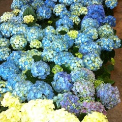 Photo taken at SF Flower Mart by Erica J. S. on 2/16/2012