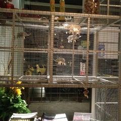 Photo taken at myElephant Thai Restaurant by Sunita T. on 6/6/2012