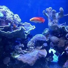 Photo taken at Maui Ocean Center, The Hawaiian Aquarium by Rebecca Z. on 3/25/2013