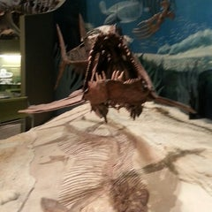 Photo taken at Sam Noble Oklahoma Museum of Natural History by ⓋJaredⓋ on 7/30/2013
