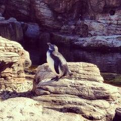 Photo taken at New York Aquarium by Mario G. on 9/21/2013