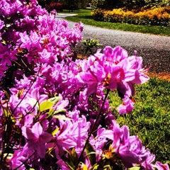 Photo taken at Azalea Gardens by Alex U. on 5/4/2013