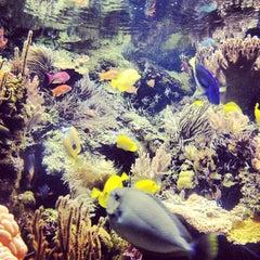 Photo taken at National Aquarium by Aqui G. on 2/25/2013