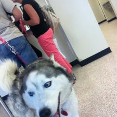 Photo taken at Houston Humane Society by Lillian M. on 3/28/2013