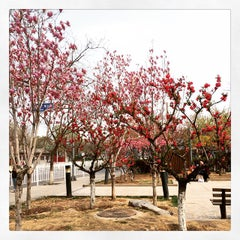 Photo taken at 皇城根遗址公园 Huangchenggen Yizhi Park by 过 李. on 4/4/2015