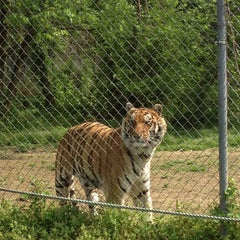 Photo taken at Carolina Tiger Rescue by Andrea K. on 4/28/2014