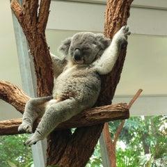 Photo taken at Lone Pine Koala Sanctuary by Logan J. on 2/10/2013