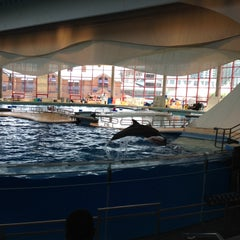 Photo taken at Dolphin Show by Oscar A. on 6/9/2015