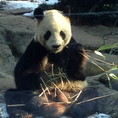 Photo taken at 上野動物園 (Ueno Zoo) by Joe on 1/20/2013