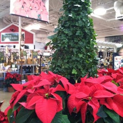 Photo taken at Pike Nurseries by Melodie M. on 11/30/2012