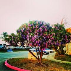 Photo taken at University Oaks by Daniel E. on 3/11/2013