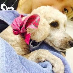 Photo taken at โรงพยาบาลสัตว์สุวรรณชาด (Suwanchard Pet Hospital) by Nusara K. on 5/27/2015