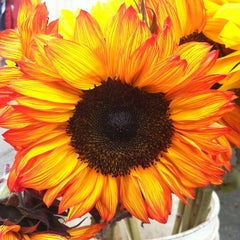 Photo taken at Stonestown Farmers Market by Kevin L. on 8/11/2013