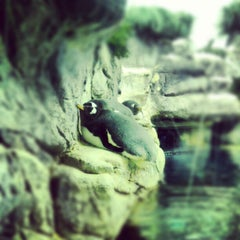 Photo taken at Moody Gardens Aquarium Pyramid by Ross O. on 12/23/2012