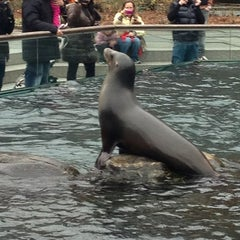Photo taken at Central Park Zoo by The GEM Hotel NYC on 1/13/2013