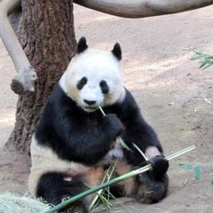 Photo taken at San Diego Zoo by Ayako on 8/12/2013
