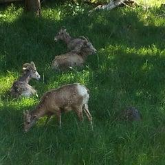 Photo taken at Northwest Trek Wildlife Park by Susie F. on 5/6/2013