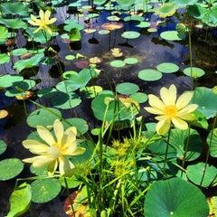 Photo taken at Lake Ivanhoe Park by Joaquin V. on 7/7/2013