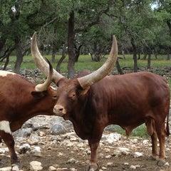 Photo taken at Natural Bridge Wildlife Ranch by Jackie G M. on 6/15/2013