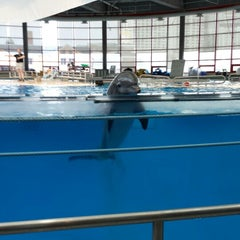 Photo taken at Dolphin Show by Cathy B. on 8/11/2013