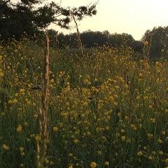 Photo taken at Parc Scheutbospark by Philippe G. on 6/11/2013