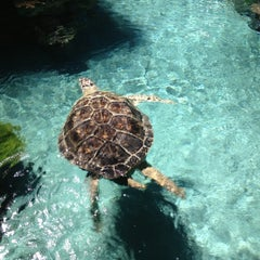 Photo taken at National Aquarium by Abby on 7/27/2013