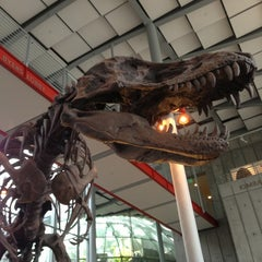 Photo taken at California Academy of Sciences by Austin P. on 7/26/2013