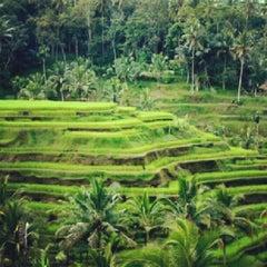 Photo taken at Ubud by Wayan R. on 10/17/2012