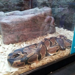 Photo taken at Petco by Shelby L. on 7/26/2013