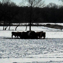 Photo taken at Cherry Grove Farm by Rich W. on 1/4/2014