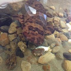 Photo taken at Heal the Bay's Santa Monica Pier Aquarium by Caroline O. on 7/22/2014