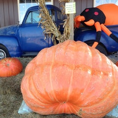Photo taken at Great Country Farms by William H. on 10/25/2014