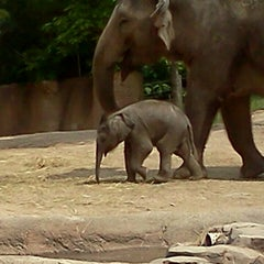 Photo taken at Saint Louis Zoo by Heather B. on 6/4/2013