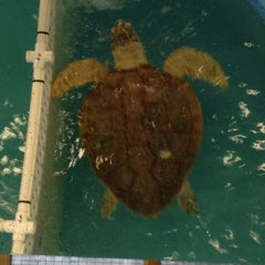 Photo taken at Georgia Sea Turtle Center by Holly T. on 1/2/2013