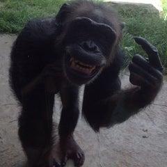 Photo taken at Houston Zoo by Сергей Д. on 7/23/2013