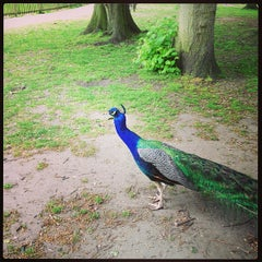 Photo taken at Holland Park by Seth F. on 5/19/2013