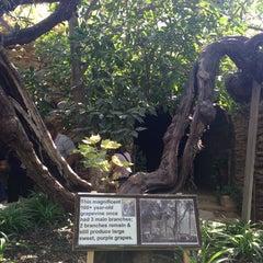 Photo taken at Underground Gardens - Baldasare Forestiere by 🌺 Connie M. on 9/21/2014