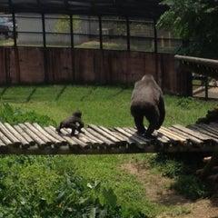 Photo taken at Little Rock Zoo by Jeff P. on 8/27/2013