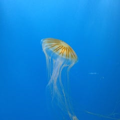 Photo taken at National Aquarium by Marcel S. on 7/2/2013