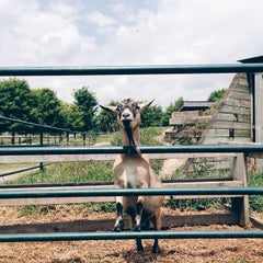 Photo taken at Windreach Farm by Nick H. on 7/26/2014