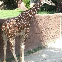 Photo taken at Saint Louis Zoo by Cheryl W. on 7/22/2013