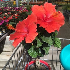 Photo taken at Lowe's Home Improvement by Brian P. on 4/8/2015