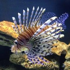 Photo taken at New York Aquarium by Richard M. on 10/7/2012