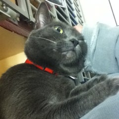Photo taken at Monadnock Humane Society Shelter by Mary on 3/21/2014