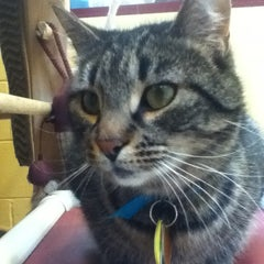 Photo taken at Monadnock Humane Society Shelter by Mary on 4/30/2014