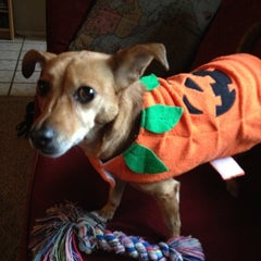 Photo taken at Pet-a-palooza by Susan B. on 11/1/2012