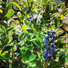 Photo taken at Tuckerberry Hill Blueberry Farm by Stephen A. on 1/6/2013