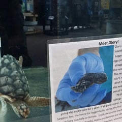 Photo taken at Georgia Sea Turtle Center by Tory A. on 5/25/2014
