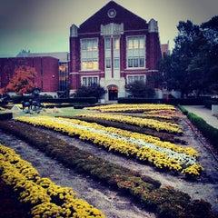Photo taken at University of Oklahoma by Raynea H. on 11/4/2013