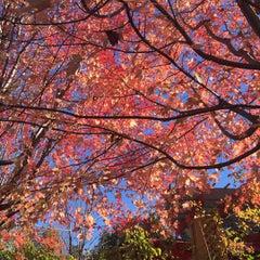 Photo taken at The Morton Arboretum by 🌹Sun! on 11/2/2015